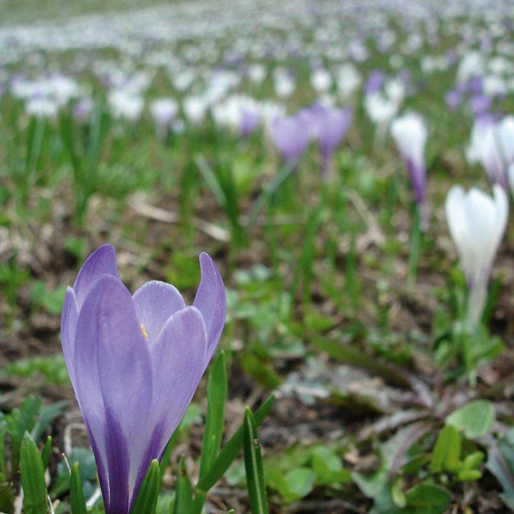 Frühling in Passeier