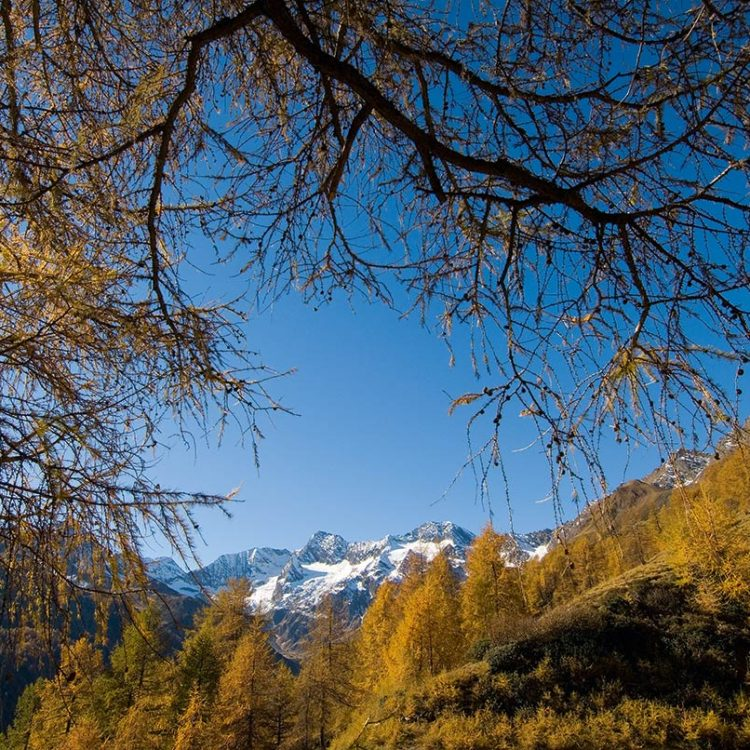 Herbst Passeier